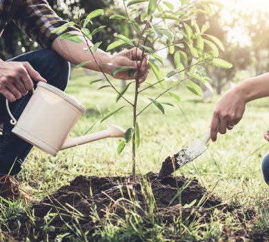 View our Tree Planting page